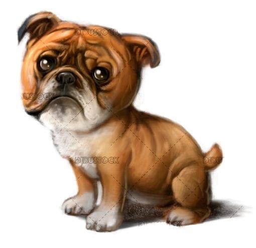 Breed of Bulldog