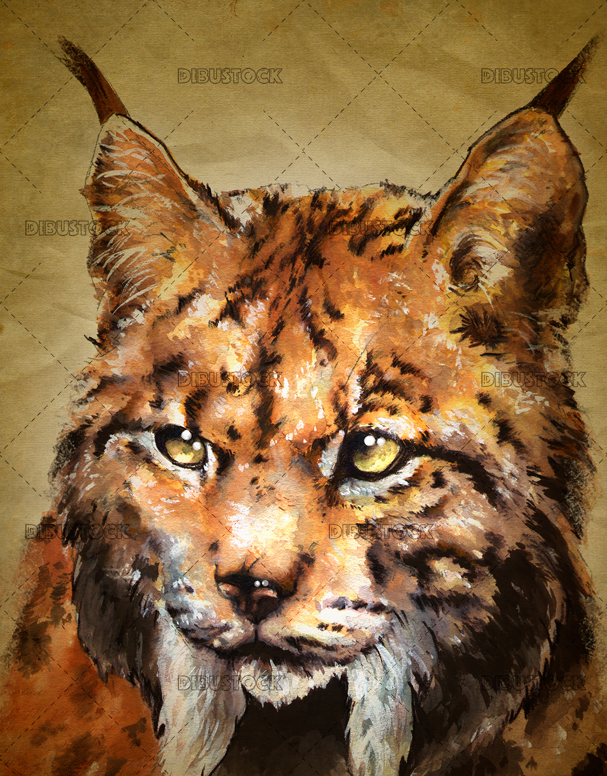 Lynx face illustration