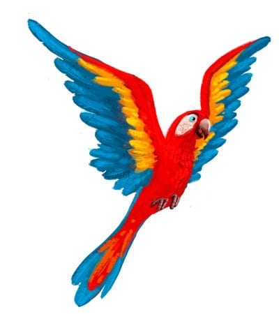 Macaw drawing white background