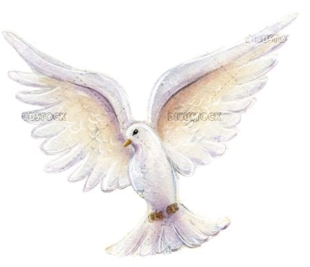 Flying pigeon