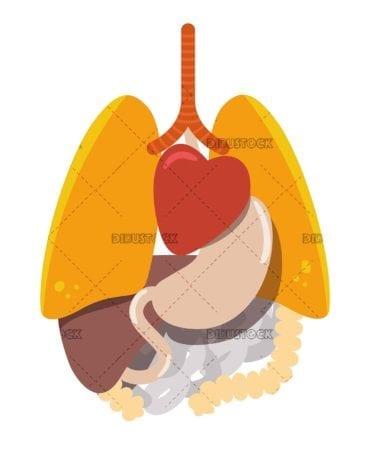 Human body organs with flat design