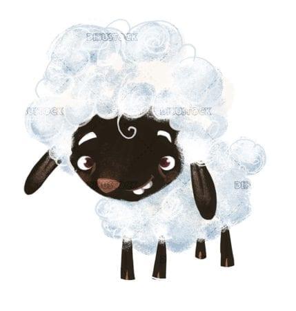 black white wool sheep