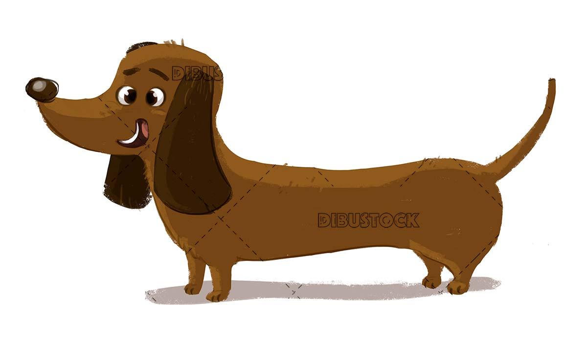 cheerful dachshund