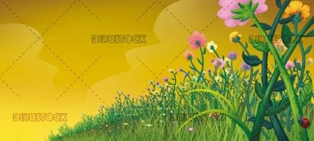 flower field landscape