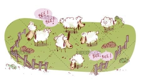 funny sheep while they graze