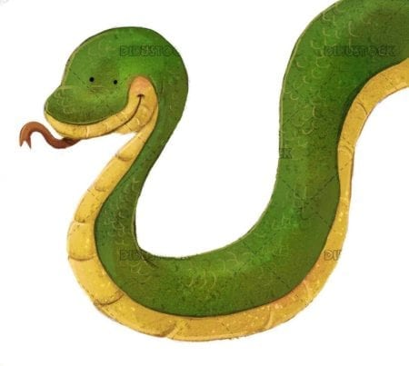green snake with isolated background