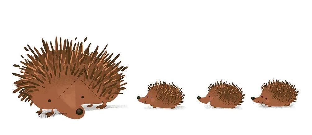 hedgehog family on white background
