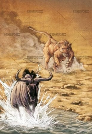 lioness hunting a wildebeest