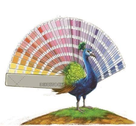 peacock with pantone