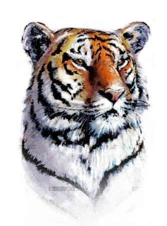 realistic tiger face