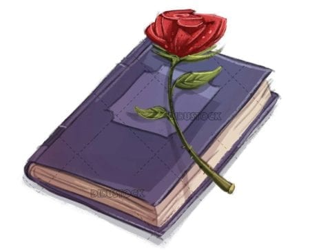 rose and book on isolated background