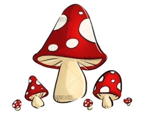 small red and white mushrooms on isolated background