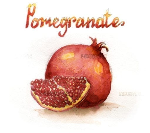 Watercolor illustration of pomegranate fruit