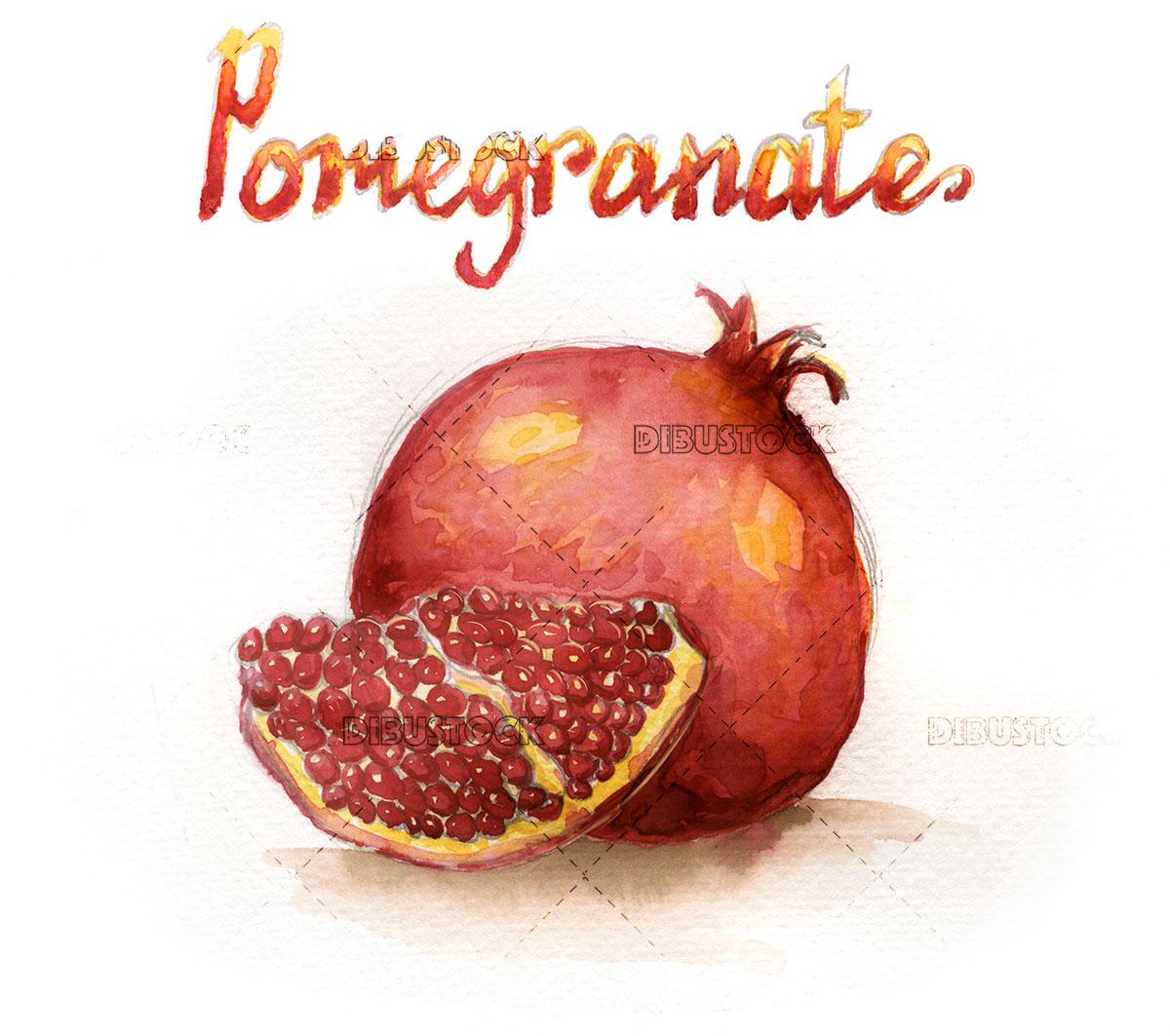 Watercolor illustration of pomegranate fruit