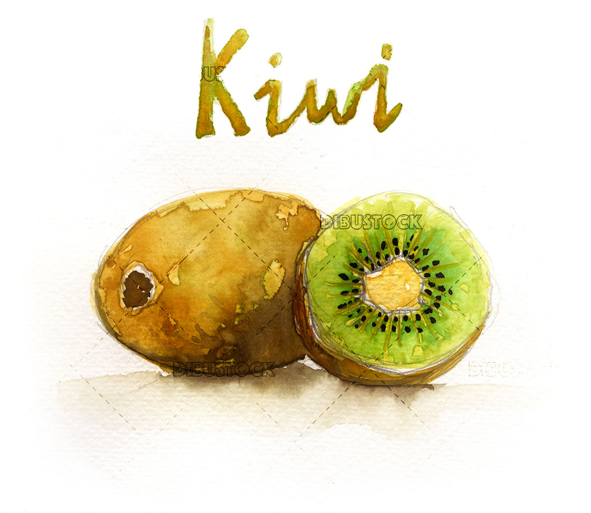 watercolor illustration of kiwi fruit