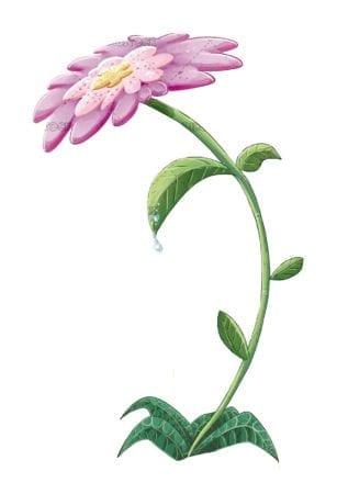 Isolated flower illustration