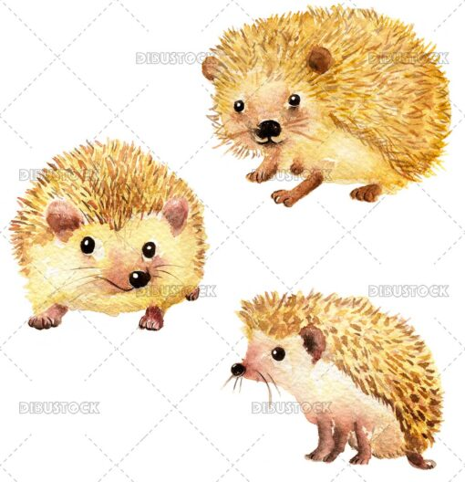 Hedgehog in different poses