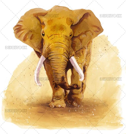 African elephant illustration in watercolor