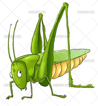 Green grasshopper illustration