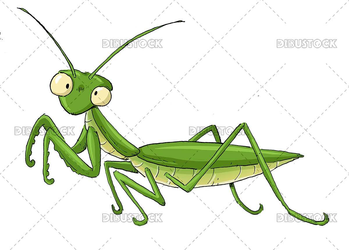 Green mantis illustration
