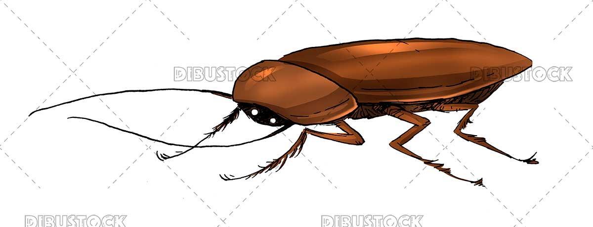 Insect cockroach illustration