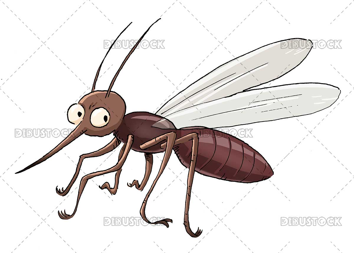 Mosquito insect illustration