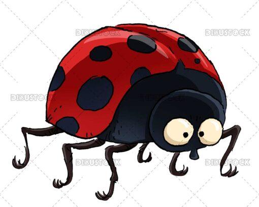 Red ladybug insect illustration