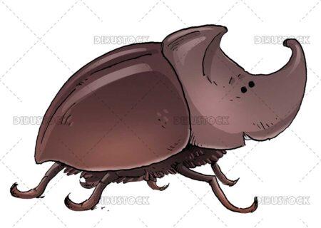 Rhinoceros beetle illustration