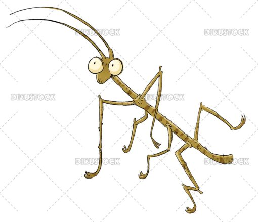 Stick insect illustration