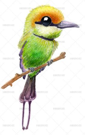 Wild bird illustration in watercolor